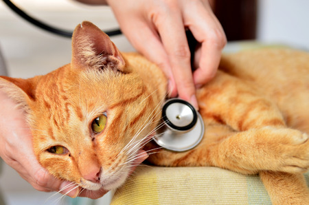 The Importance of Wellness Care for Pets