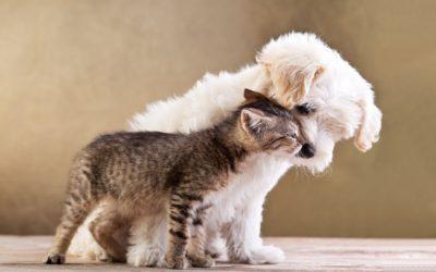 Your Pet's Wellness Exam
