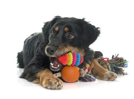 Doggy Daycare for Puppies, Active Breeds, Social Dogs