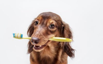 9 Signs Your Pet Needs Dental Care