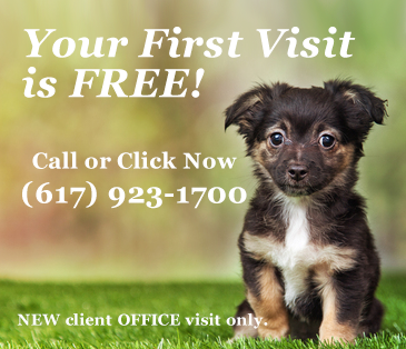 First Office Visit Free at Neponset Animal Hospital Dorchester MA
