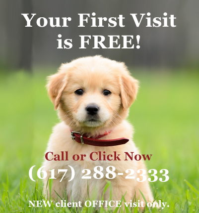 First visit free at Neponset Animal Hospital Dorchester MA