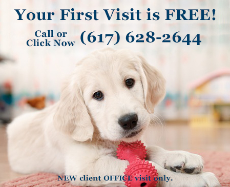Your first visit is free at Union Square Veterinary in Somerville MA