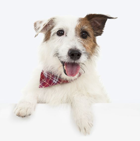 Your first visit is free at Neponset Animal Hospital, Boston MA